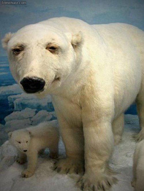 Realistisch ausgestopfte Tiere #2