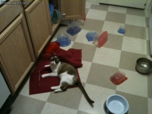 Teuflische Katzen