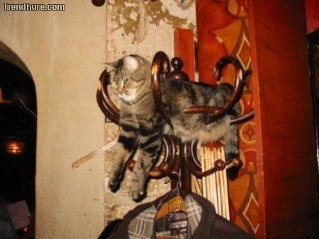 Chillende Katzen