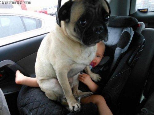 Hunde Freiraum