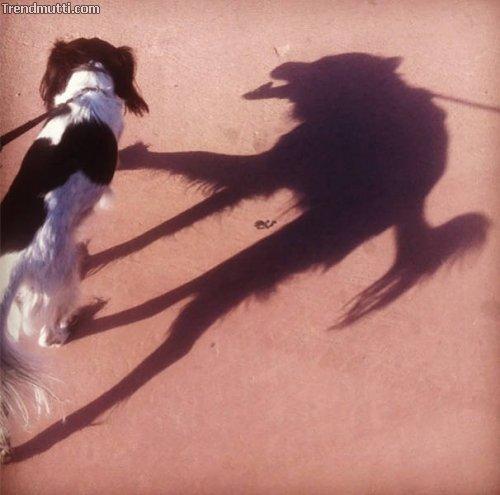 Schattenfotos