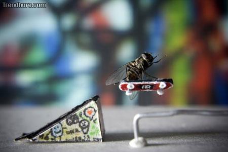 Abenteuer einer Fliege