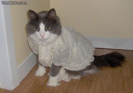 tierbekleidung
