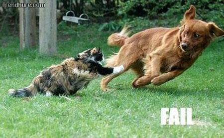 fail dog