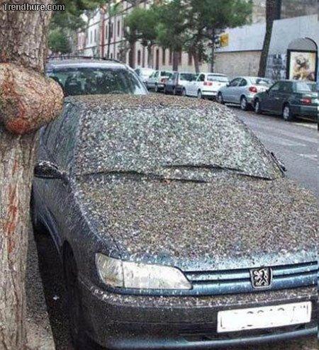 Tiere gegen Autos