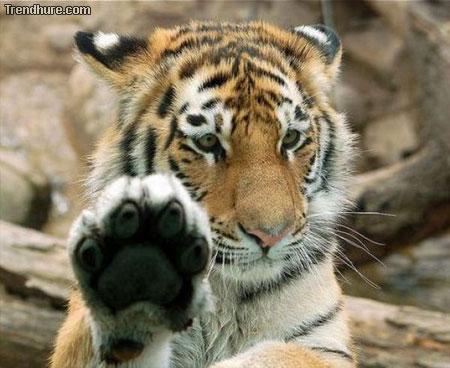 High Five Animal