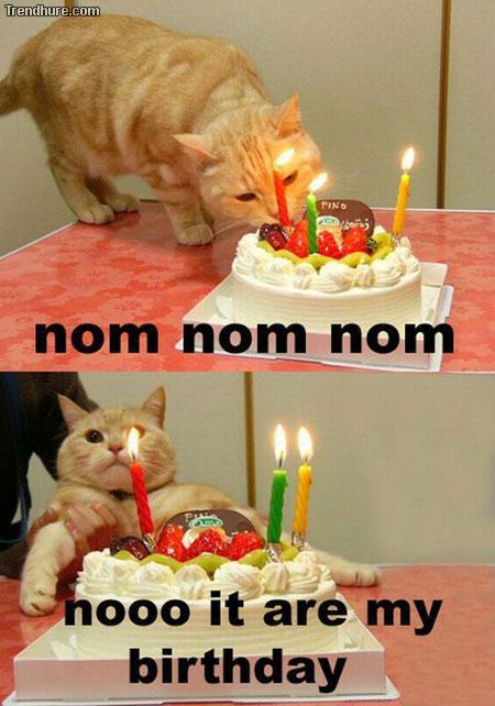 Katze hat Geburtstag