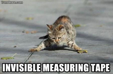 Katzen mit unsichtbaren Dingen