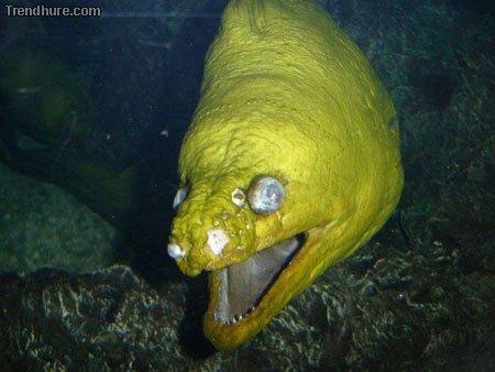 Hässliche Fische