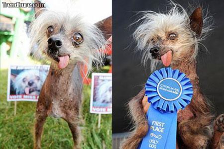 Hässliche Hunde