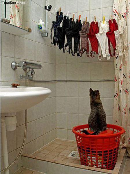 Katze BH