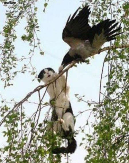 Vogel greift an