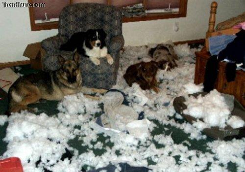 Hunde zerstören alles