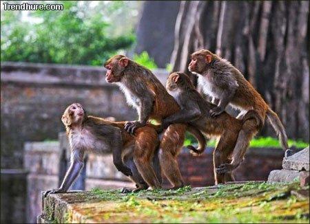 Lustige Affen