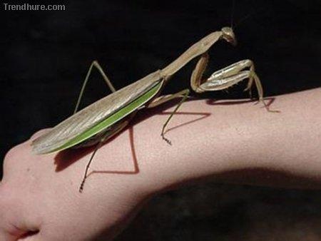 Große Insekten