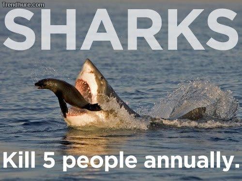 Dinge, die mehr Menschen töten als Haie