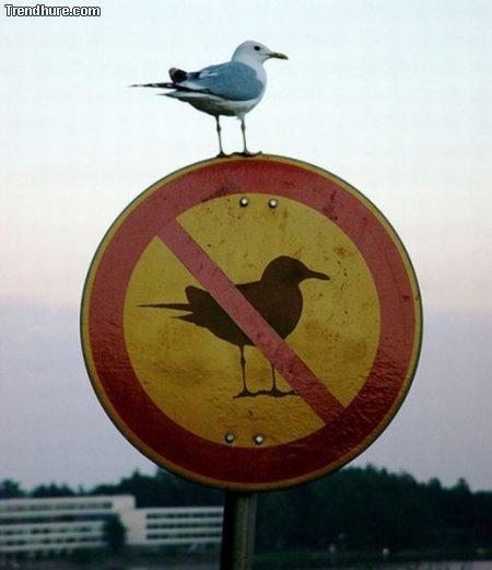 Paradoxe Schilder