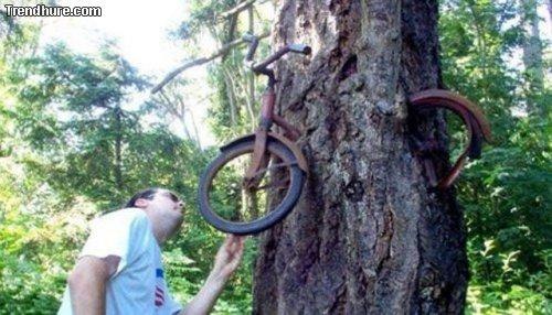 Bäume essen alles