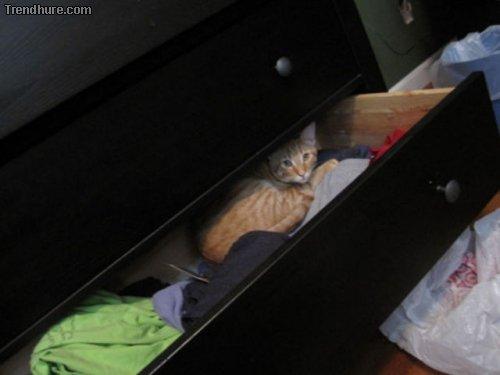 Wenn Katzen chillen