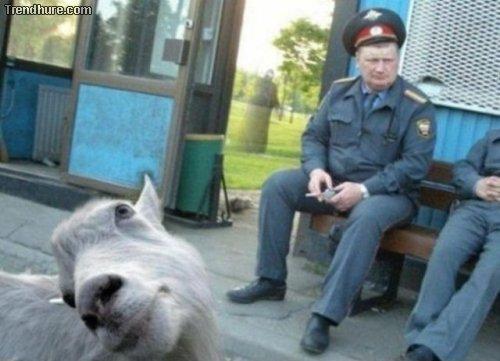 Tierische Fotobomben