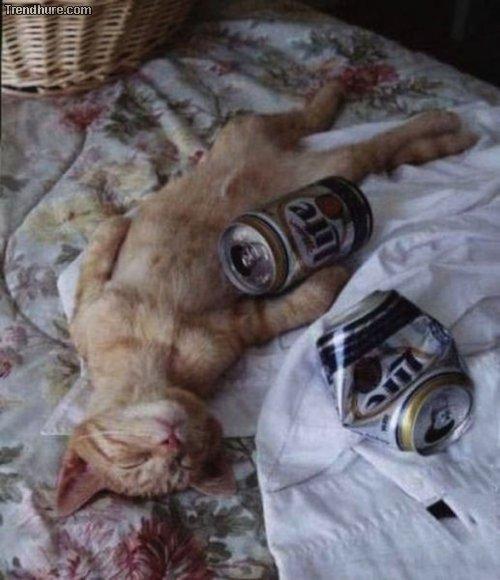 Nicht zu viel trinken
