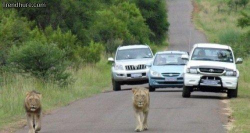Nur in Afrika...