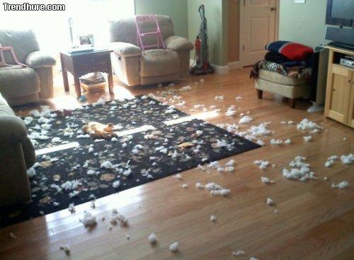Tiere ruinieren alles