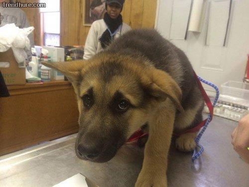 Nicht zum Tierarzt