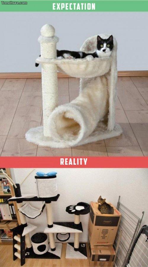 Leben mit einer Katze