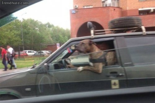 Meanwhile in Russia #36