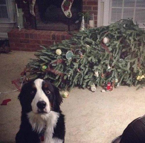 Schuldige Hunde
